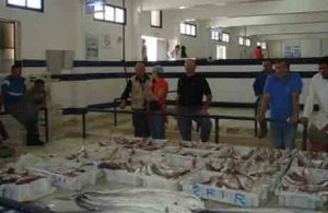 Mercato-del-pesce-di-Genova